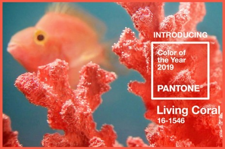 Pantone-2019-color-of-the-year-1_2